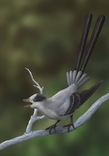Fossil bird with fancy tail feathers shows that sometimes, it's survival of the sexiest