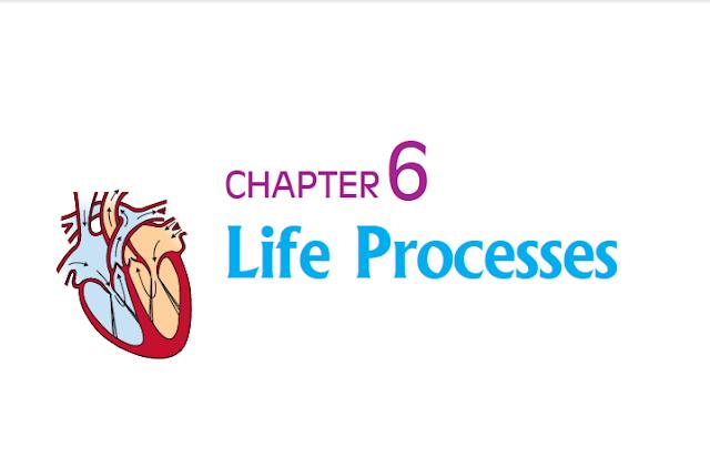 CLASS 10 SCIENCE LIFE PROCESS