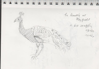 pencil sketch of a peacock by David Borden
