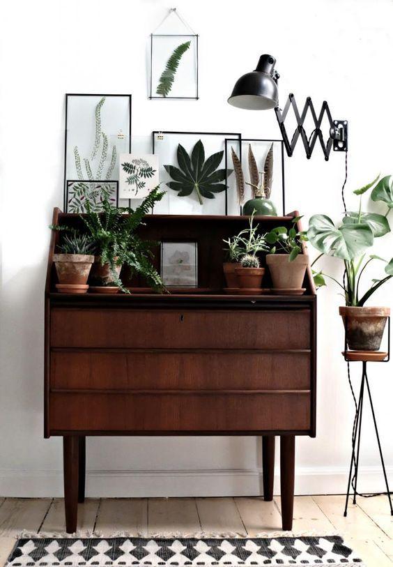 """Una planta es uno de los mejores portadores de energía """"viva"""" para nuestra casa."""