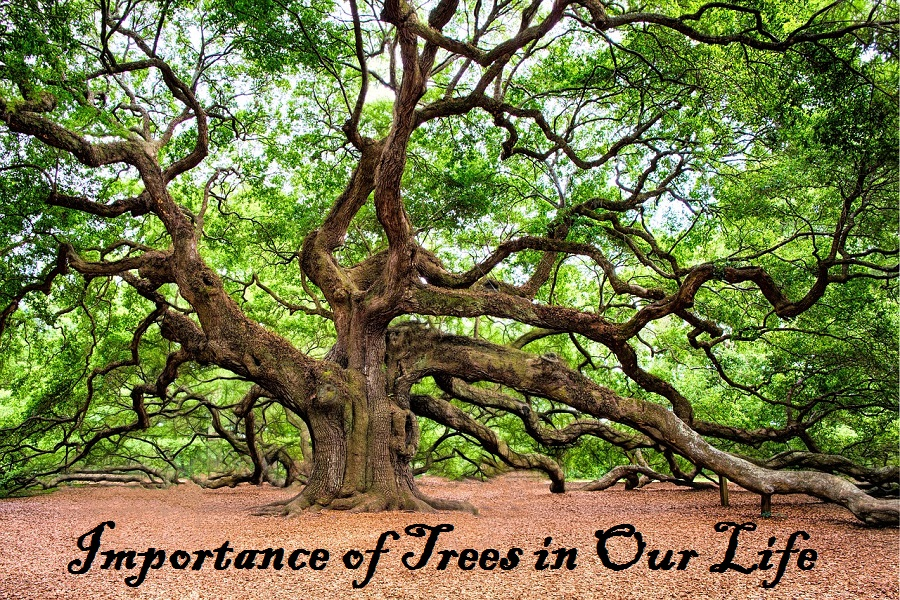 Importance of Trees