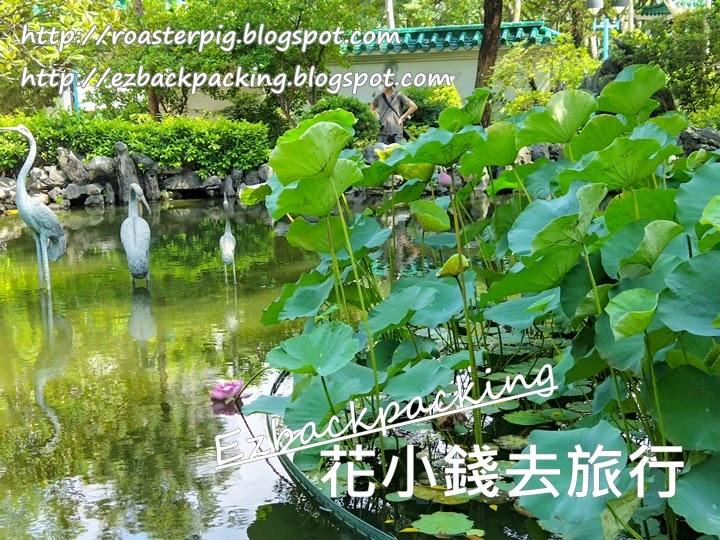 荔枝角庭園和荷花