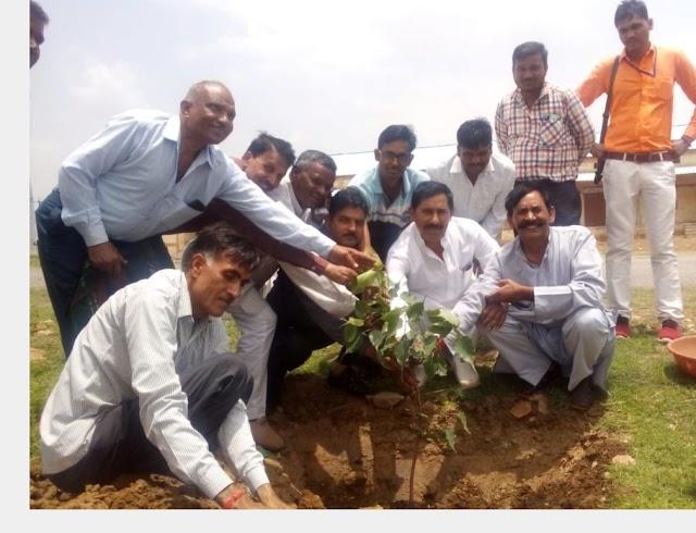 बैराड -  मंडी प्रांगण में किया विधायक सुरेश रांठखेड़ा ने वृक्षारोपण