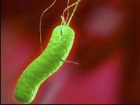 Điều trị ung thư dạ dày bằng cách diệt vi khuẩn H. pylori