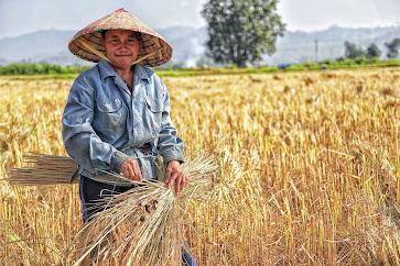Mystical Agriculture | Farming, Equipment