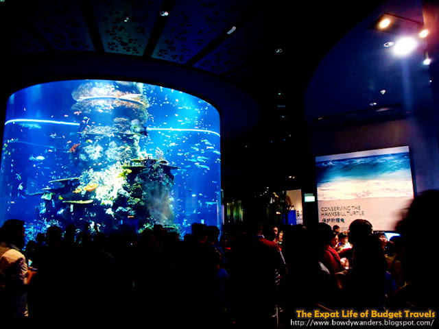 bowdywanders.com Singapore Travel Blog Philippines Photo :: Singapore :: Marine Life Park: S.E.A. Aquarium – World's Largest Aquarium