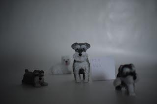 Esimerkki kuvani kapeasta syväterävyydestä. Kuvassa on pieniä lelukoiria.