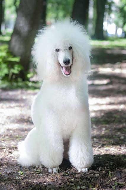 كلاب-للتبني اسعار-الكلاب هاسكي-صغير صور-الكلاب كلاب-جريفون اصوات-كلاب كلاب-زينه انواع-الكلاب-بالصور