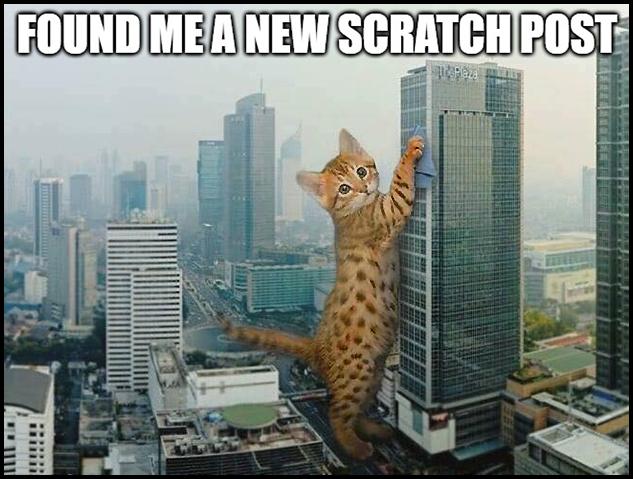KittenZilla found a new scratching post