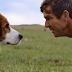 """Confira o trailer do filme """"Quatro Vidas de Um Cachorro"""""""