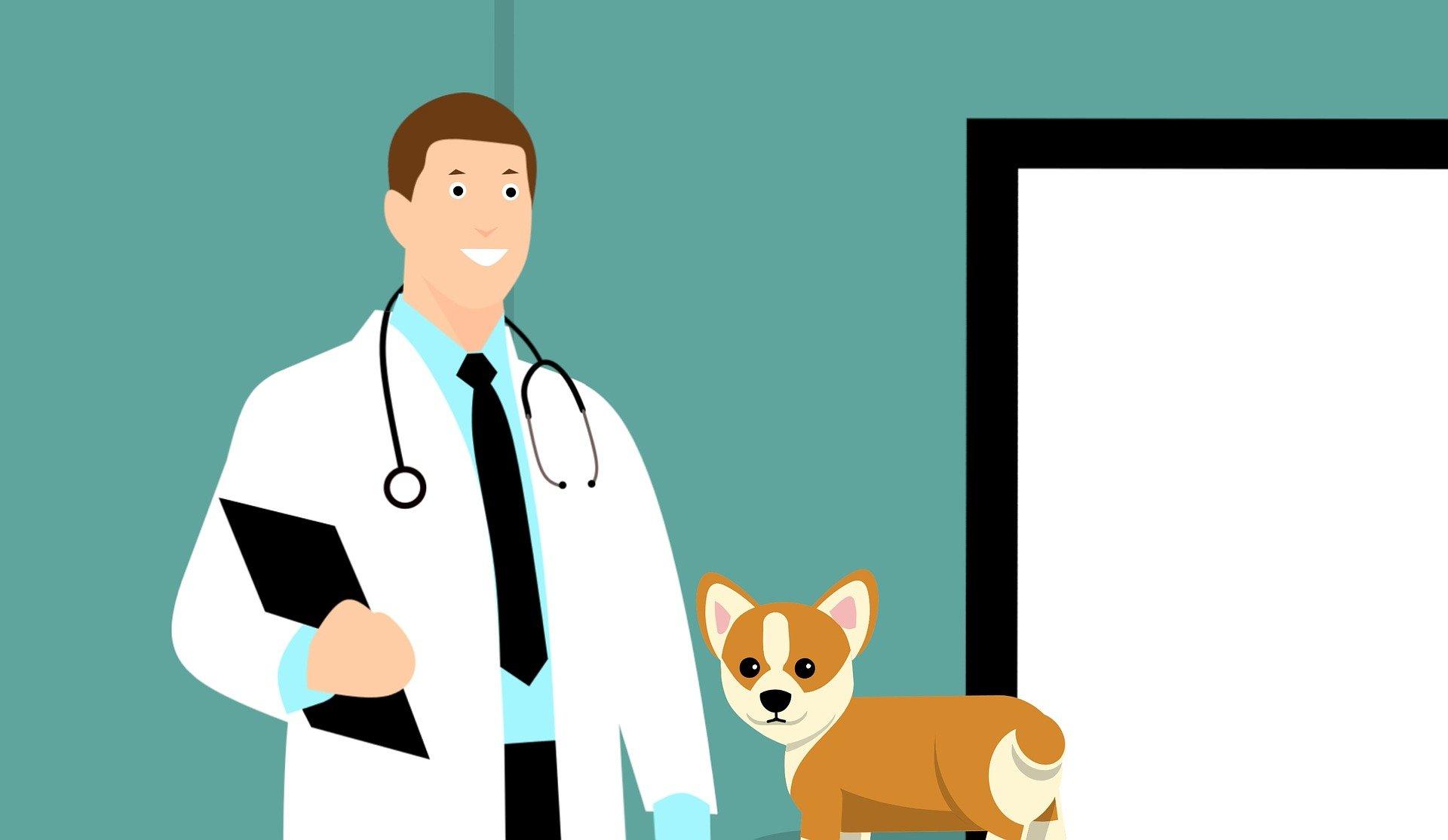 Vermifuge pour chiens lors de leur première visite vétérinaire