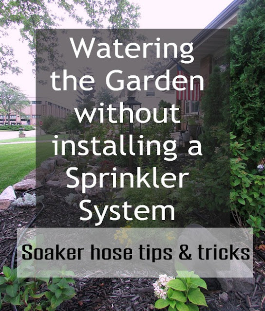 The best tips and tricks for using a soaker hose to irrigate your flower beds and shrubs.