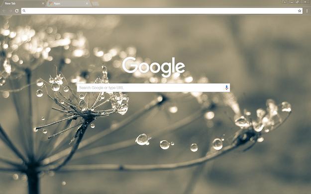 Cobweb Google Chrome Theme