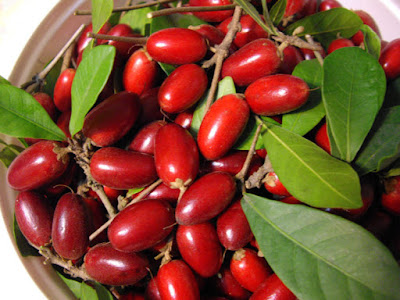 Miracle Fruit (Buah Ajaib)