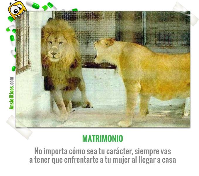 Chiste de Animales de Matrimonio
