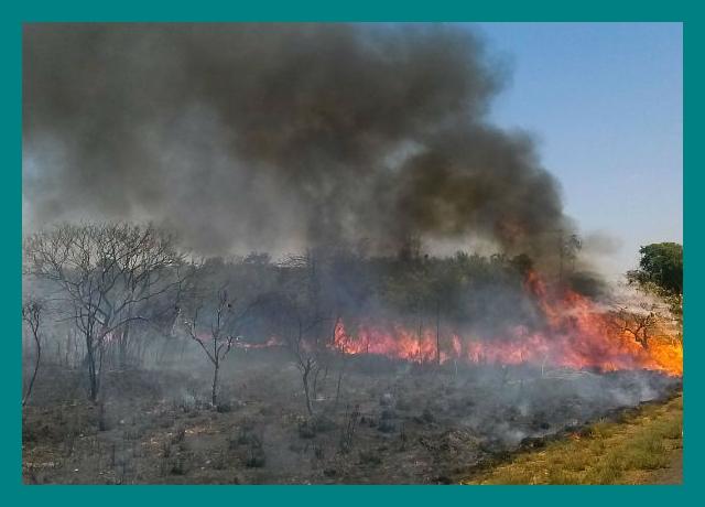 Segundo a polícia, grupo investigado já derrubou e tocou fogo em mais de 5 mil quilômetros de mata