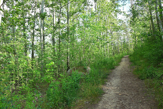Waldspaziergang Waldbaden im Landkreis Leipzig