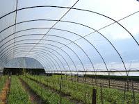 Luar Biasa, Ternyata Ini Fungsi dari Plastik UV Untuk Greenhouse