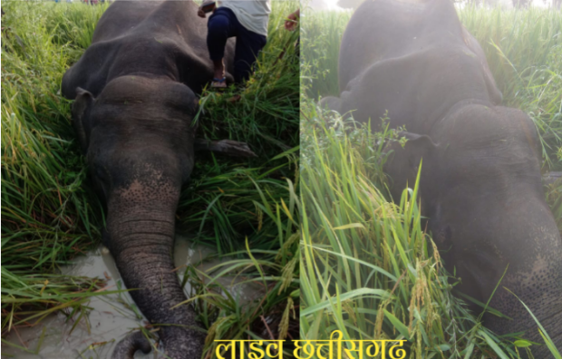 करंट लगने से हाथी की हुई मौत। लगातार जंगली हाथी ग्रामीण इलाकों में। jangli hathi