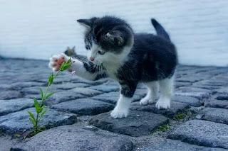 Gato jugando con una flor Gatos de la Calle