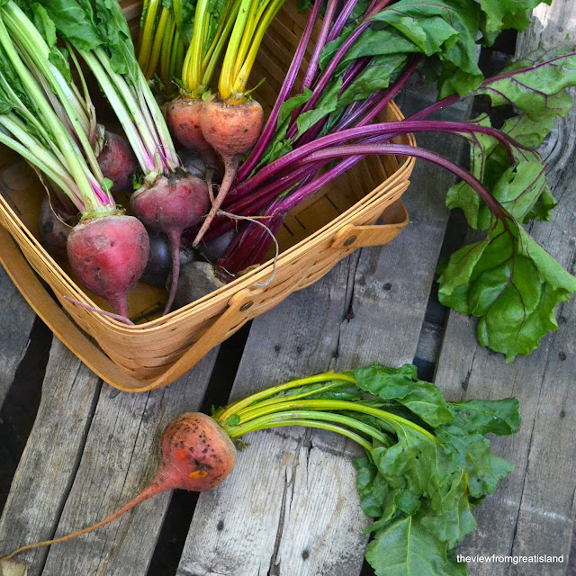 Beautiful beets for Grapefruit and Roasted Beet Salad