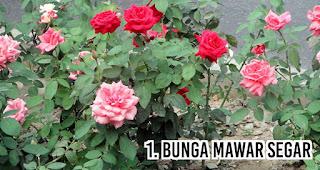 Bunga mawar segar menjadi Hadiah Paling Berkesan Untuk Pacar Anda