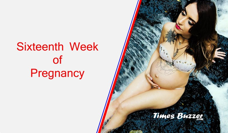 Sixteenth Week of Pregnancy