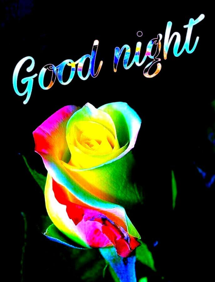 Good Night Colorful Rose