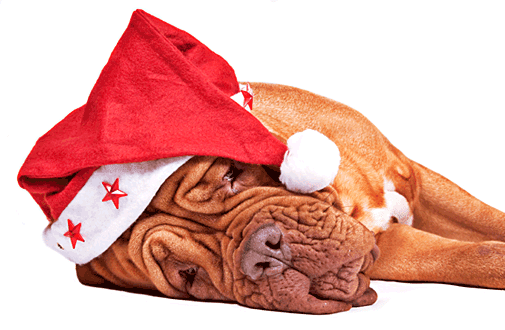 Santa Dog Eine Tierische Bescherung