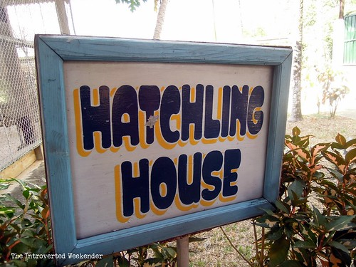 Puerto Princesa Travel Guide: crocodile hatchery at the Palawan wildlife conservation center
