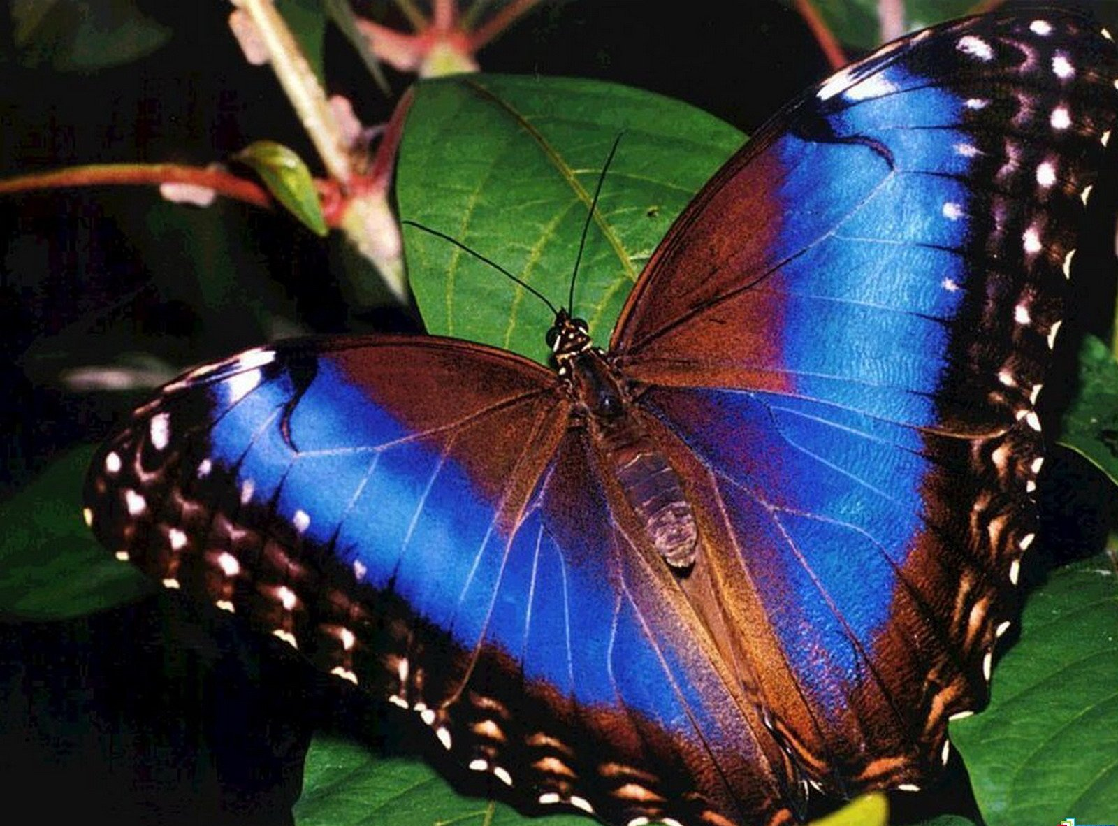 butterfly hq wallpaper 1024x768 - photo #2