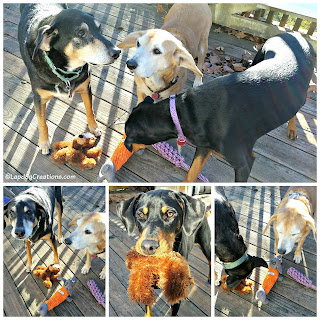 3 rescue mixed breed dogs playing with toys