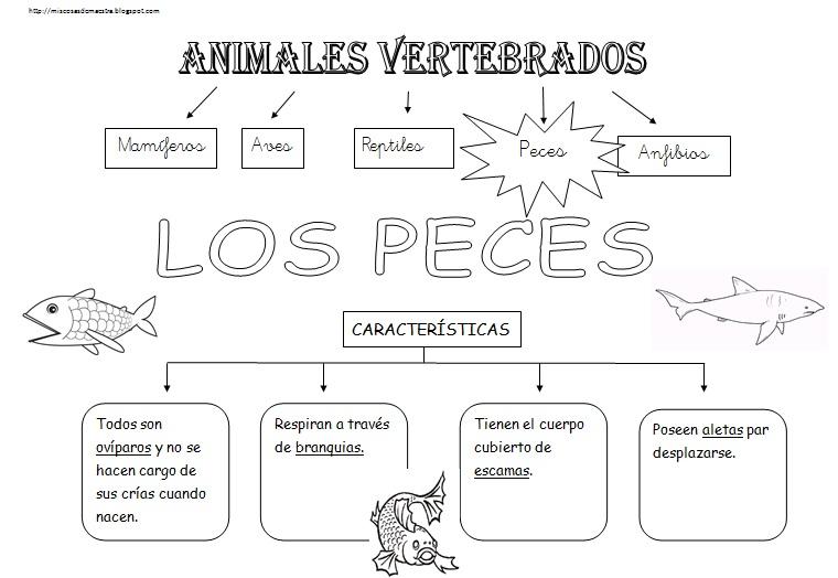 MIS COSAS DE MAESTRA*: Animales Vertebrados: Esquemas