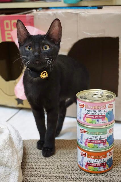 PURRFACT 波菲特貓用主食罐推薦