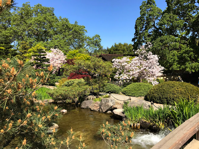 cherry trees in landscaping at a garden