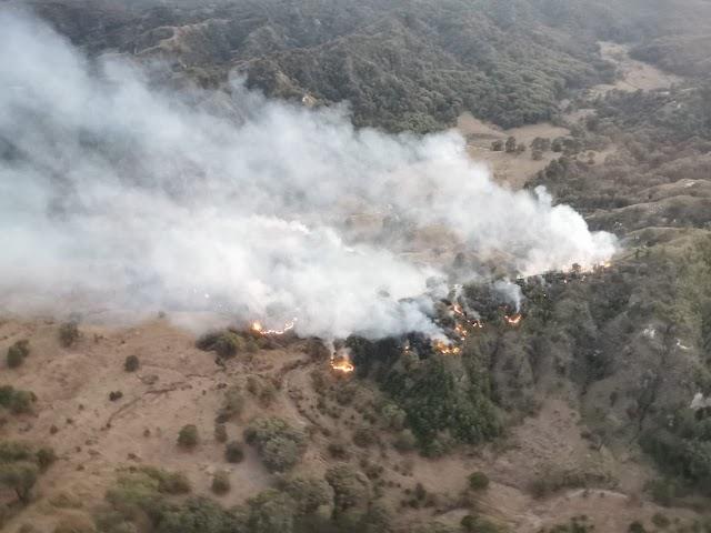 Se registra incendio forestal en el Bosque La Primavera