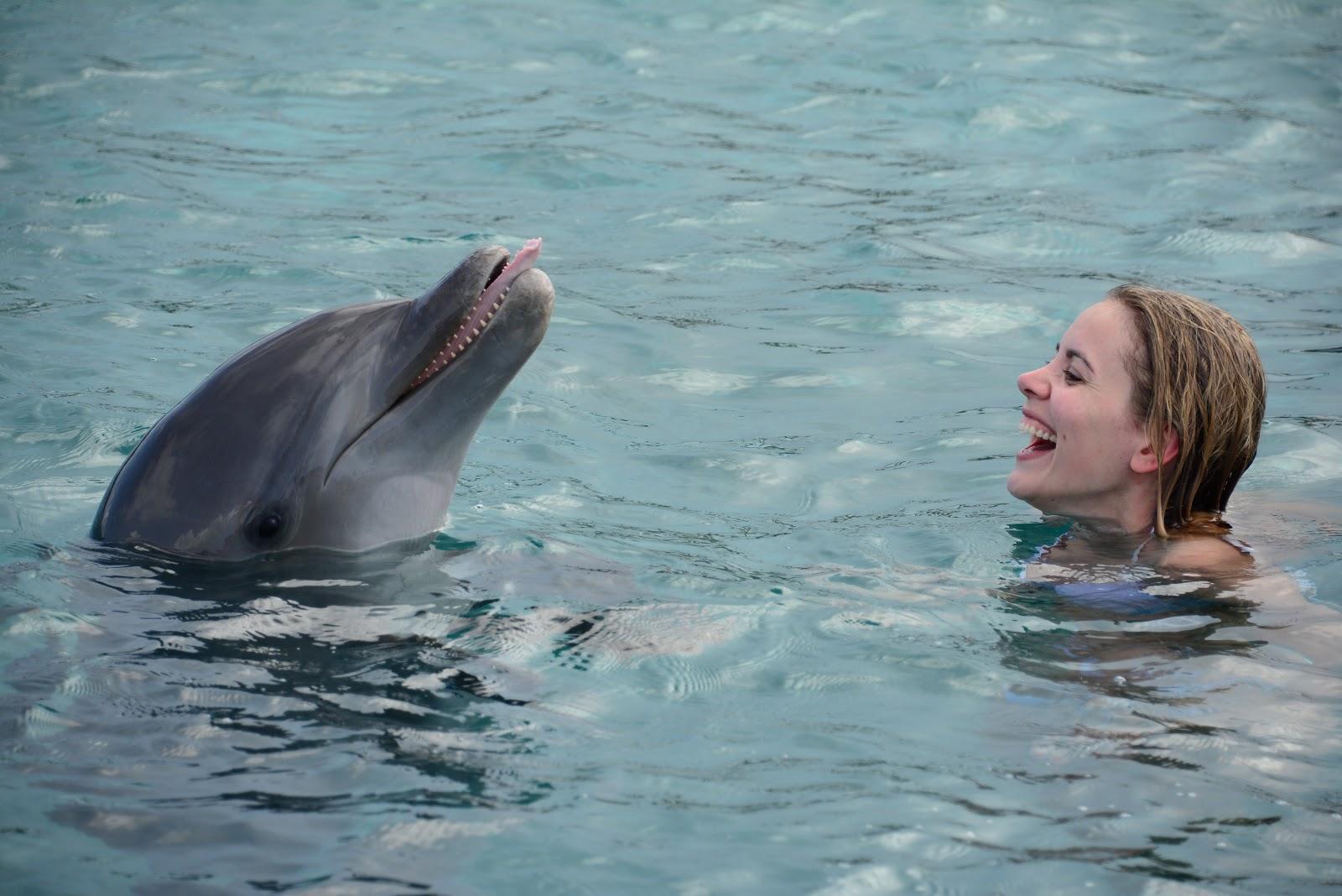 dolphin-academy-curacao