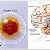 Radang Otak Definisi Penyebab Dan Pengobatan Serta Pencegahan Radang Otak Menurut Ilmu Kedokteran
