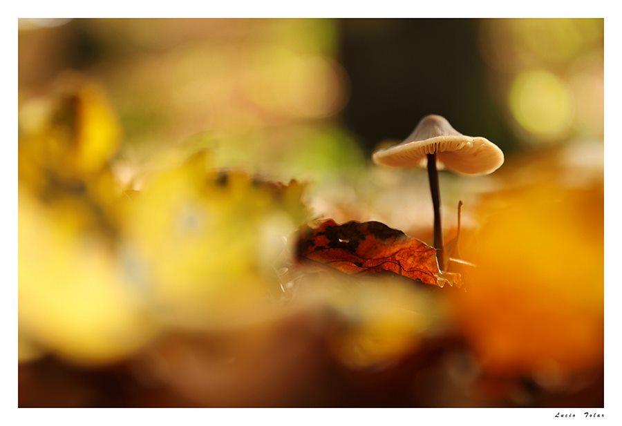 Nel magico sotto bosco