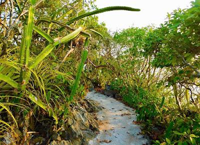 #payabay, #payabayresort, paya bay resort, nature trails, nature, wellness, beauty, good energy,