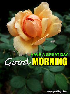 have a great day good morning flower greetings [rose images]