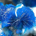 Electric-blue Veszelyite Crystals
