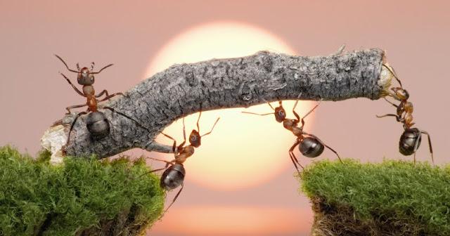 Kenapa teamwork sangat diharapkan di lingkungan kerja Membangun Team Work Membangun Team Work