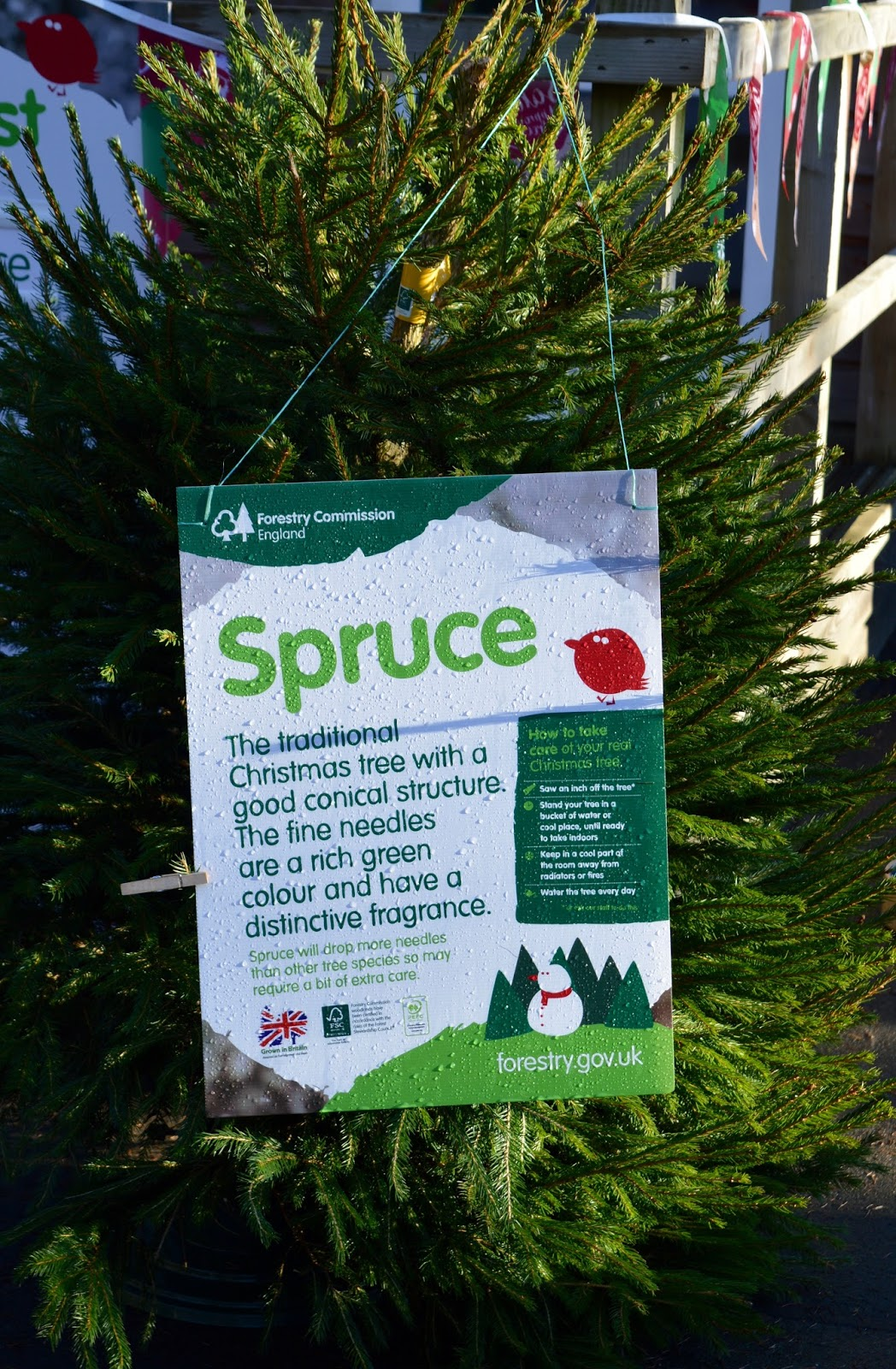 Why you should choose a real, sustainable Christmas tree from a Forestry Commission Forest (Hamsterley Forest in Durham and Kielder Forest in Northumberland) -  - spruce tree benefits