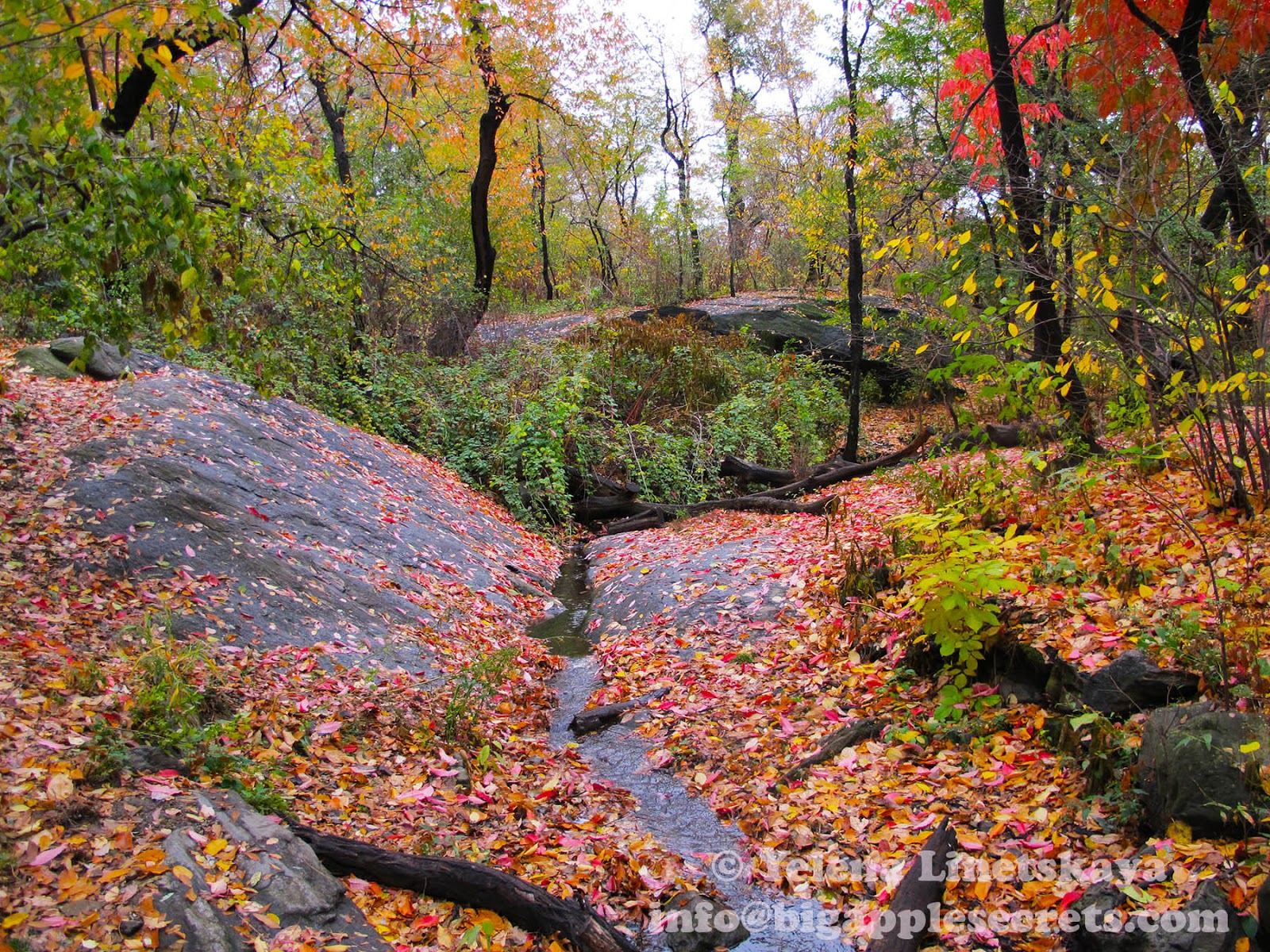 Ramble in Central Park: A Wilderness West of Fifth