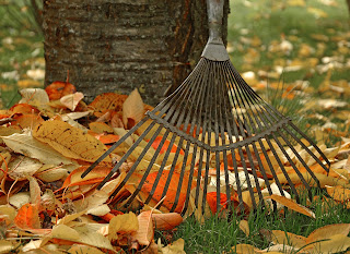 A rake leaning against a tree | Find a chiropractor Ann Arbor