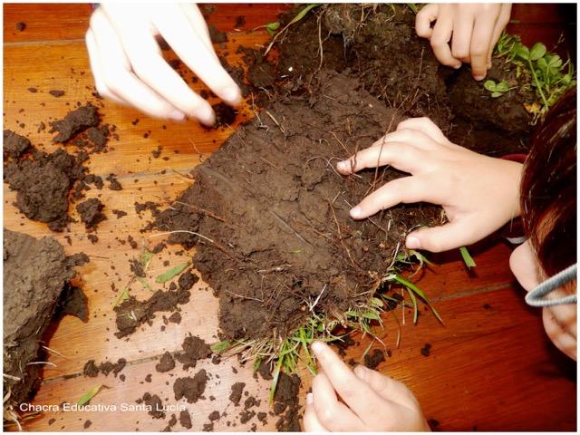 Observando panes de suelo con cubierta vegetal - Chacra Educativa Santa Lucía