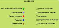 http://primerodecarlos.com/SEGUNDO_PRIMARIA/Anaya/datos/03_cmedio/03_Recursos/actividades/03/animales4.swf