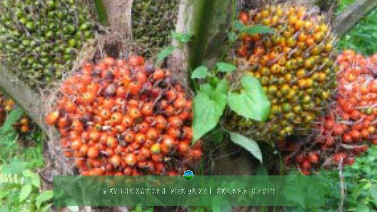 Meningkatkan Produksi Kelapa Sawit