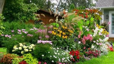 20% popusta na preko 400 vrsta semena cveća,povrća,drveća i ukrasnog žbunja